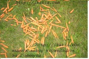 морковь на траве
