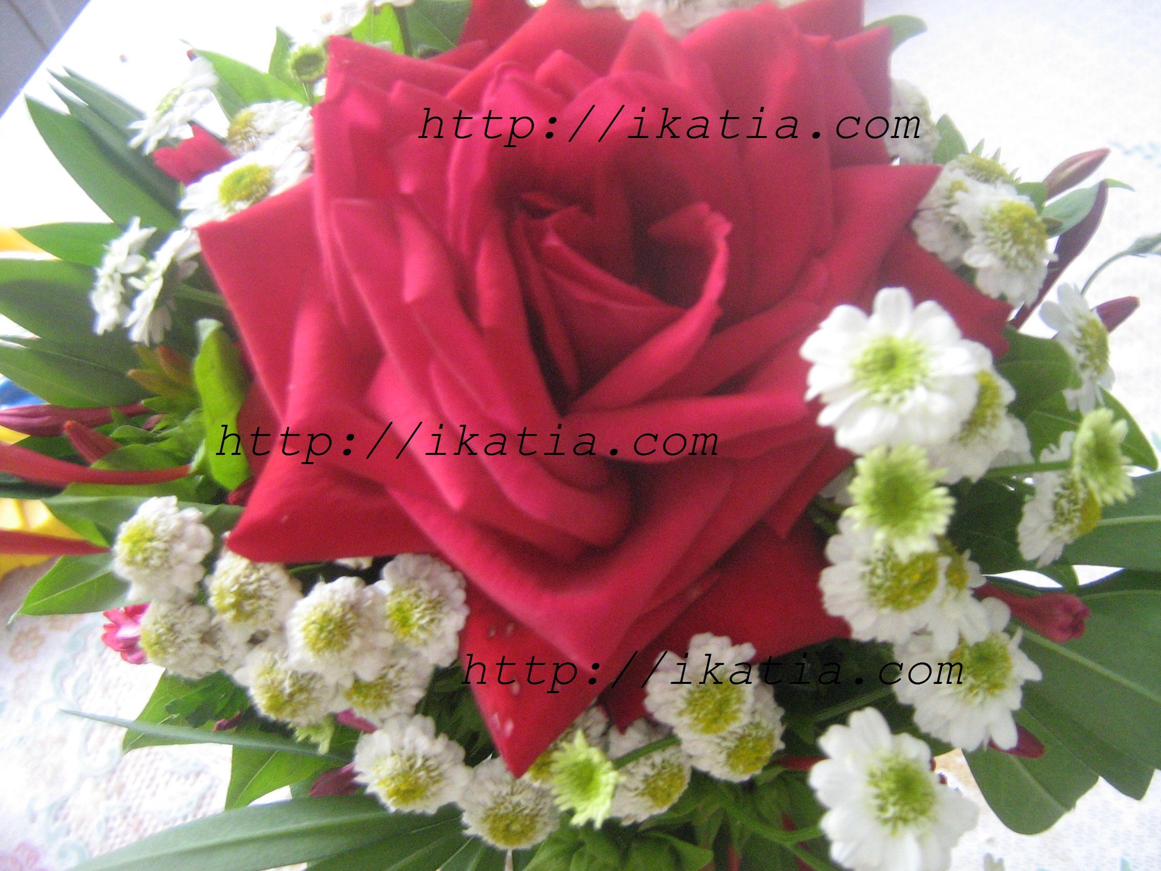 розы  букеты красивые