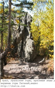 скала в лесу