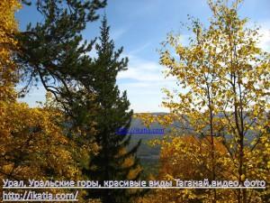вид сквозь листву деревьев на горы
