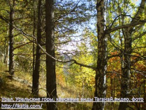 горный лес