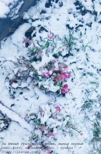 цветок в снегу