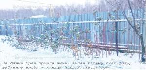 кусты малины  в снегу