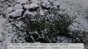 синие цветы и первый снег