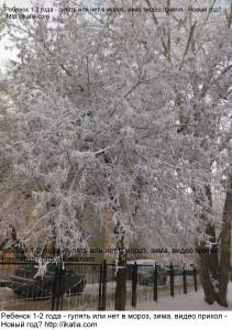 зима, деревья в снегу