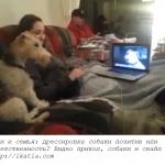 собаки и скайп