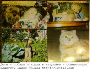 котенок, кошка и собака