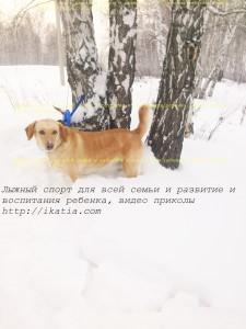 собака и береза
