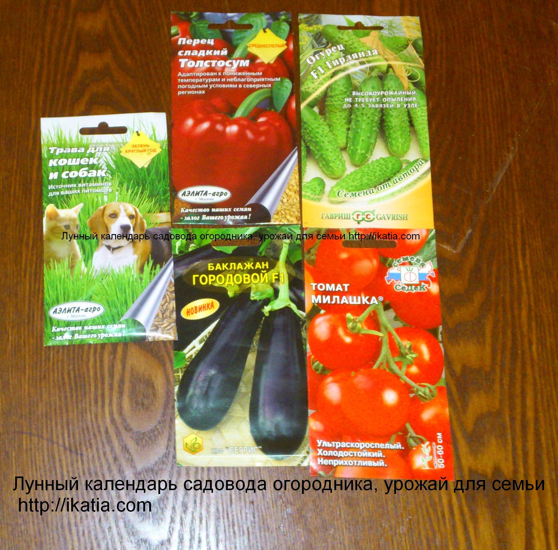 Когда лучше сажать рассаду помидоров: благоприятные дни и 69