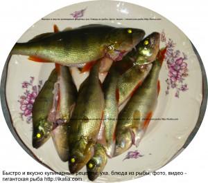 сырая рыба в тарелке